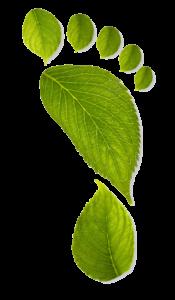 Huella humana formada por hojas de plantas